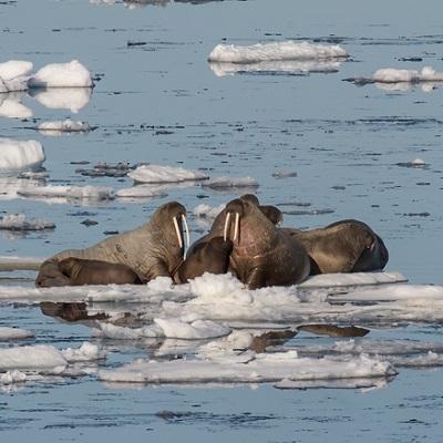 Polo nord spedizione tra i ghiacci del 90 parallelo for Cabine di pesca nel ghiaccio alberta